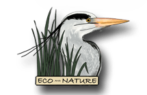 Eco and Wildlife