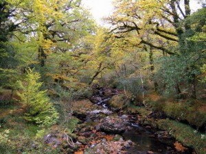 Deelish Cascades